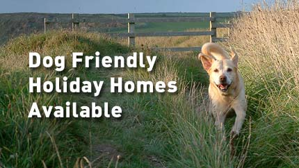dogs friendly holiday homes Newquay